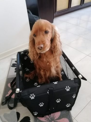 Scaun auto BOXI pentru transportul sigur al câinilor sau pisicilor photo review